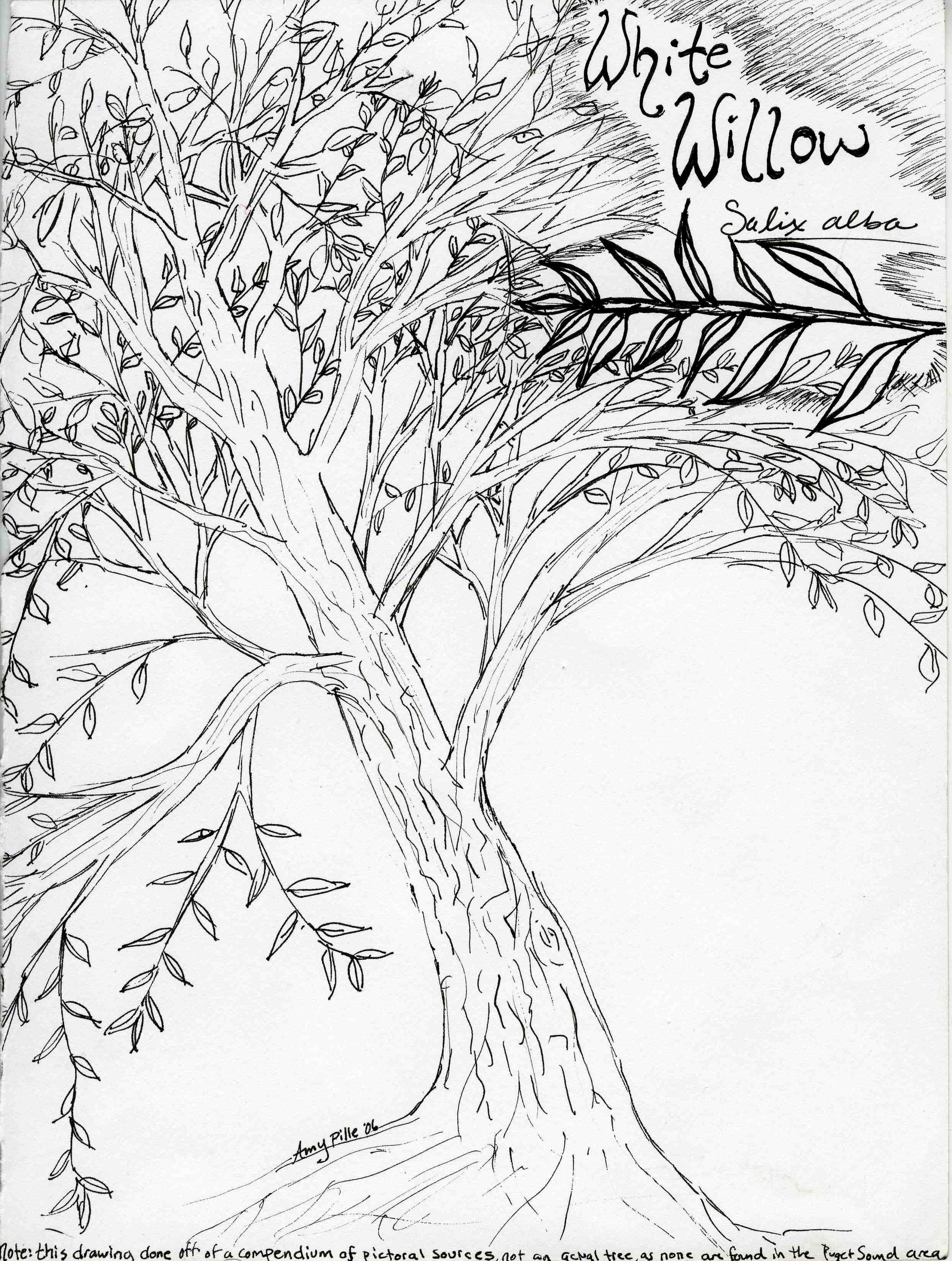 willow tree coloring pages - photo#10