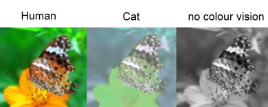 ARCHIVE , Cats , Comparative Physiology of Vision